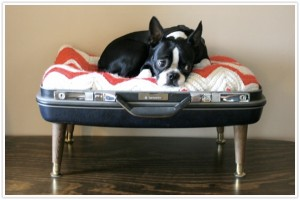 Diy Build Make Your Own Dog Bed Instructional Suitcase