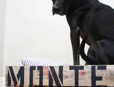 DIY Dog Bed from a Pallet | Claire Zinnecker for Camille Styles