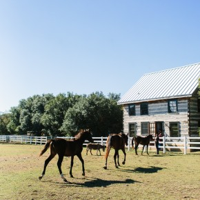 Horses and Cabin