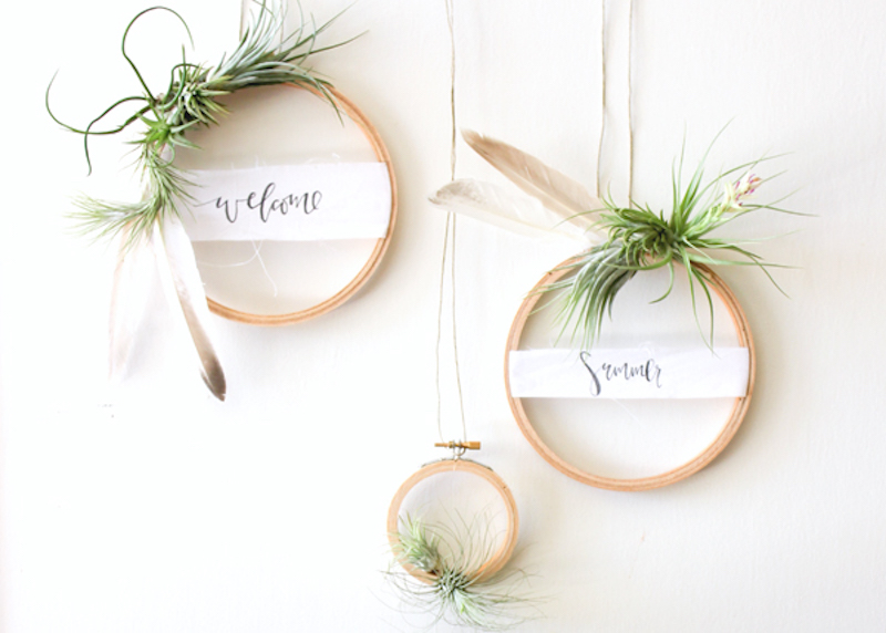 air plant wreath DIY