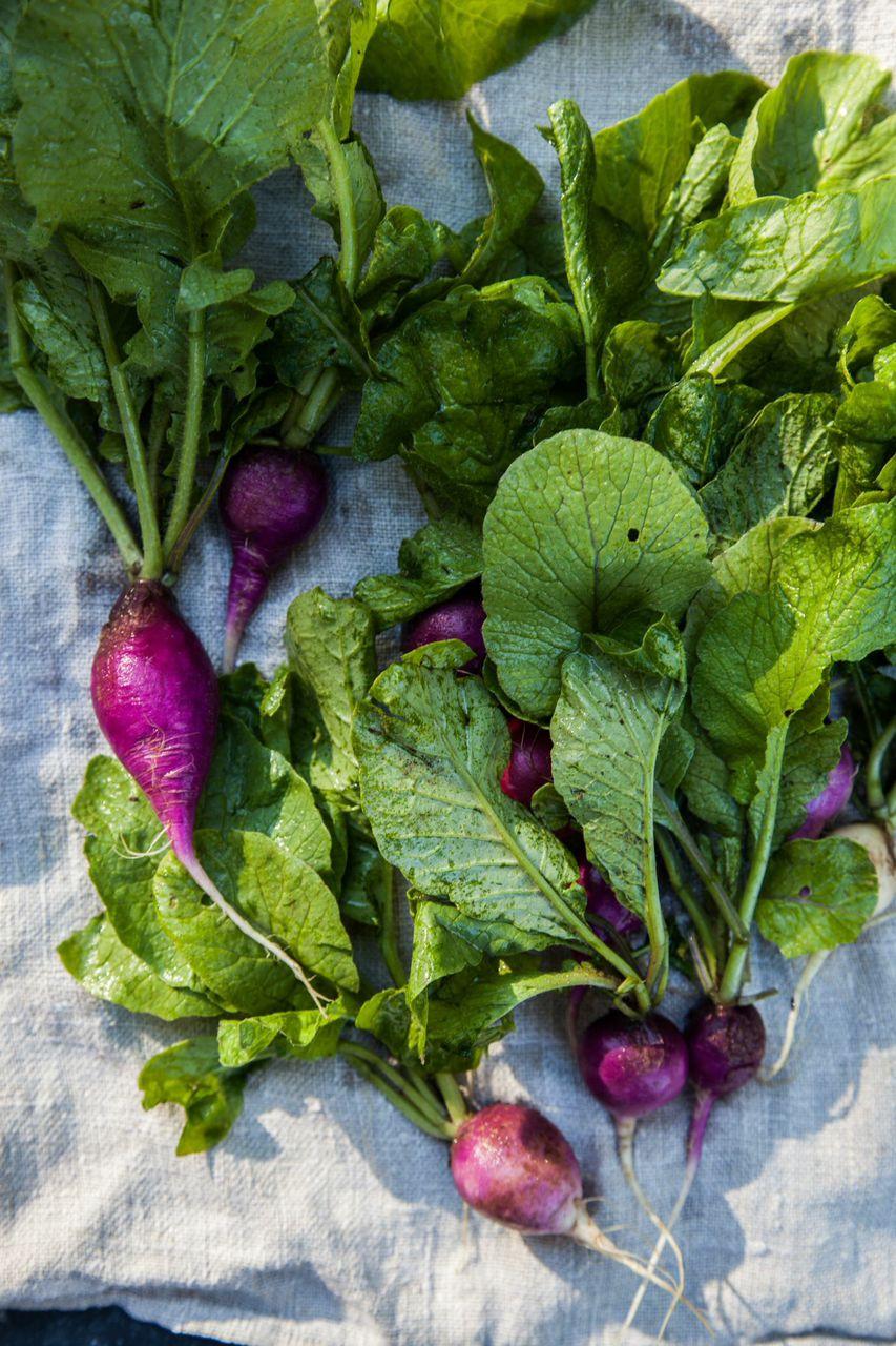 market fresh radish