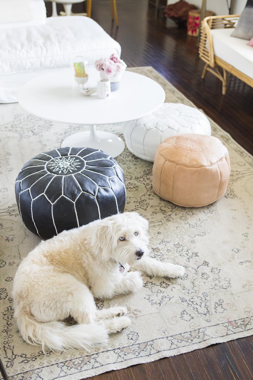 victoria smith's dog, lucy