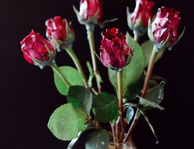 Easy Halloween DIY: Wax Dipped Flowers