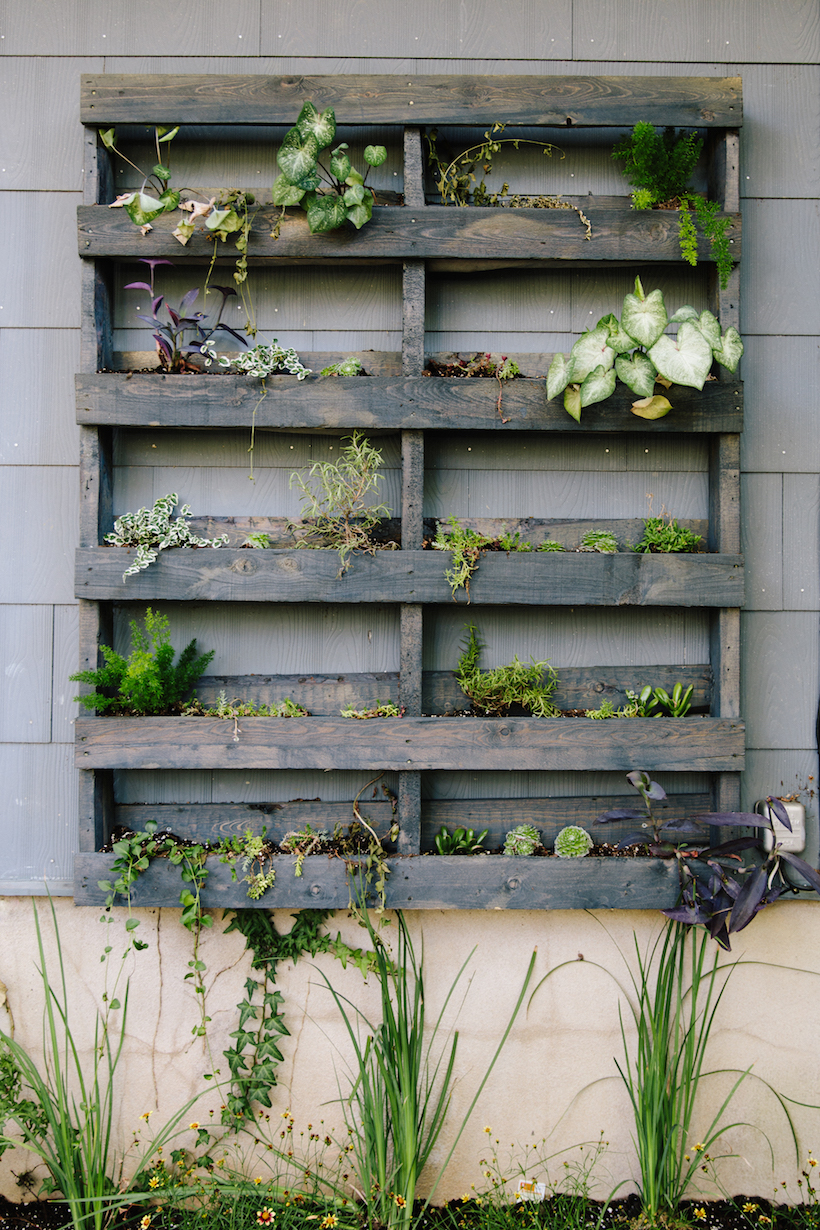live plant wall - made out of a palette!