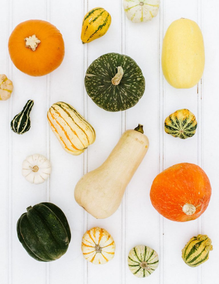 your guide to winter squash!