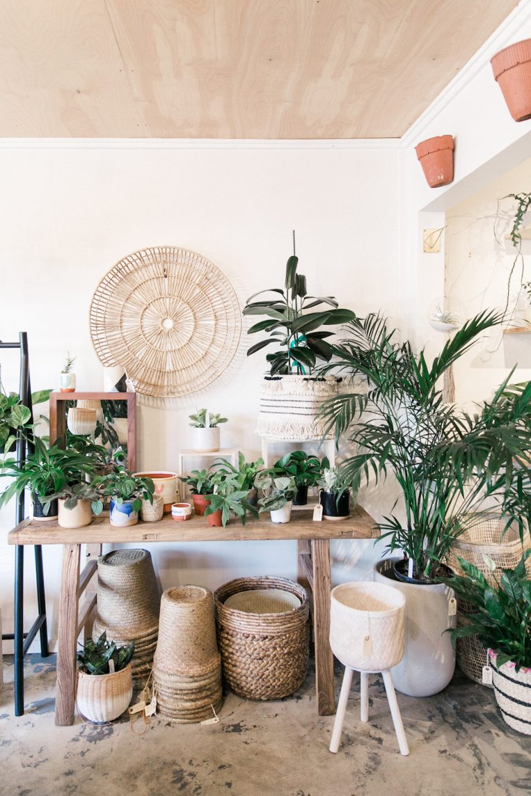 frond, plant, shop, summer, greenery