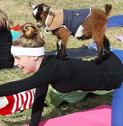 goat yoga austin texas