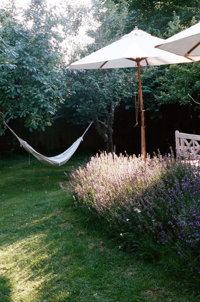 lavender in julie pointer adams's garden