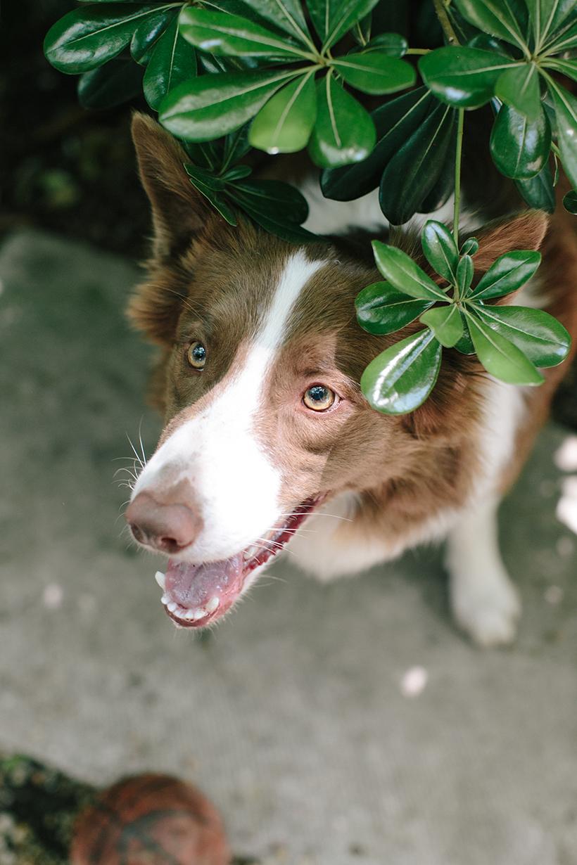 Cousin Dog