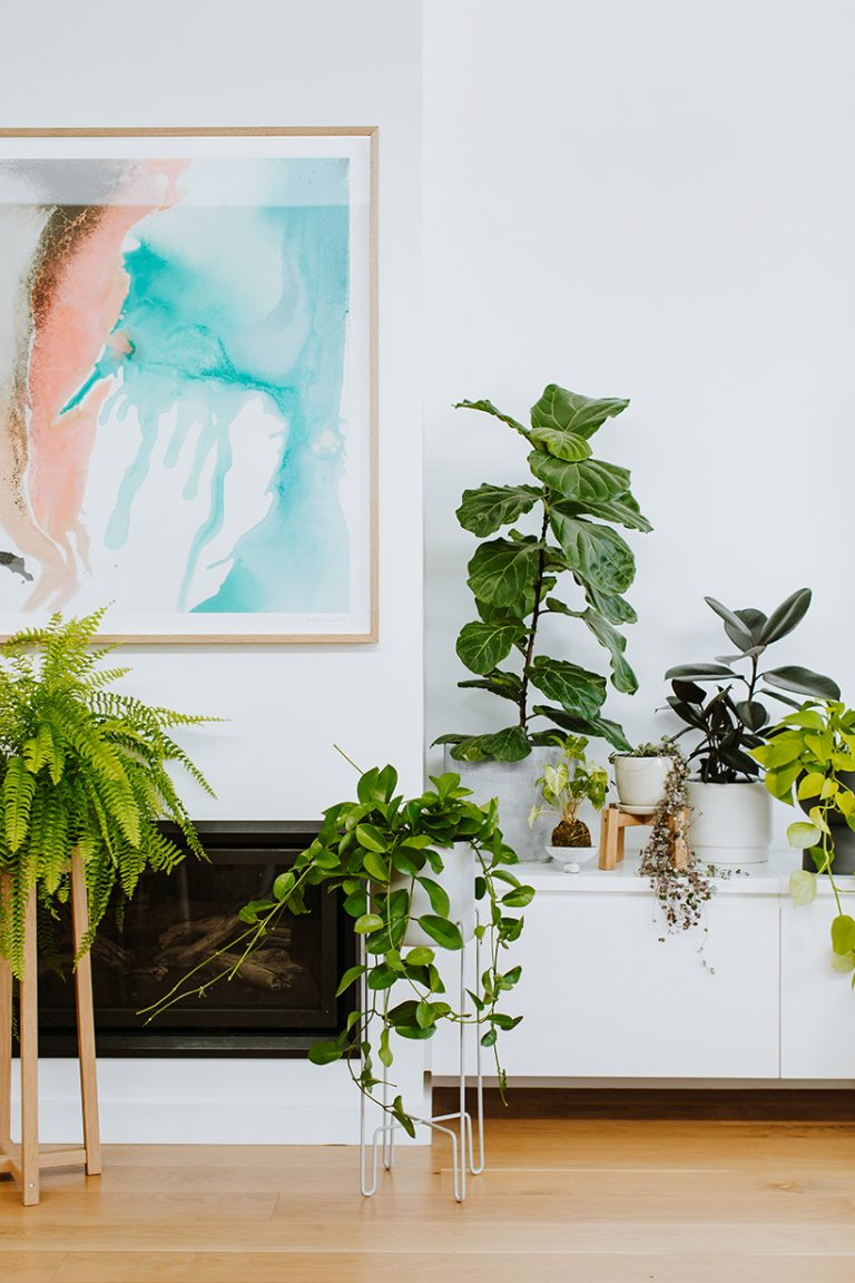 indoor plants, best houseplants