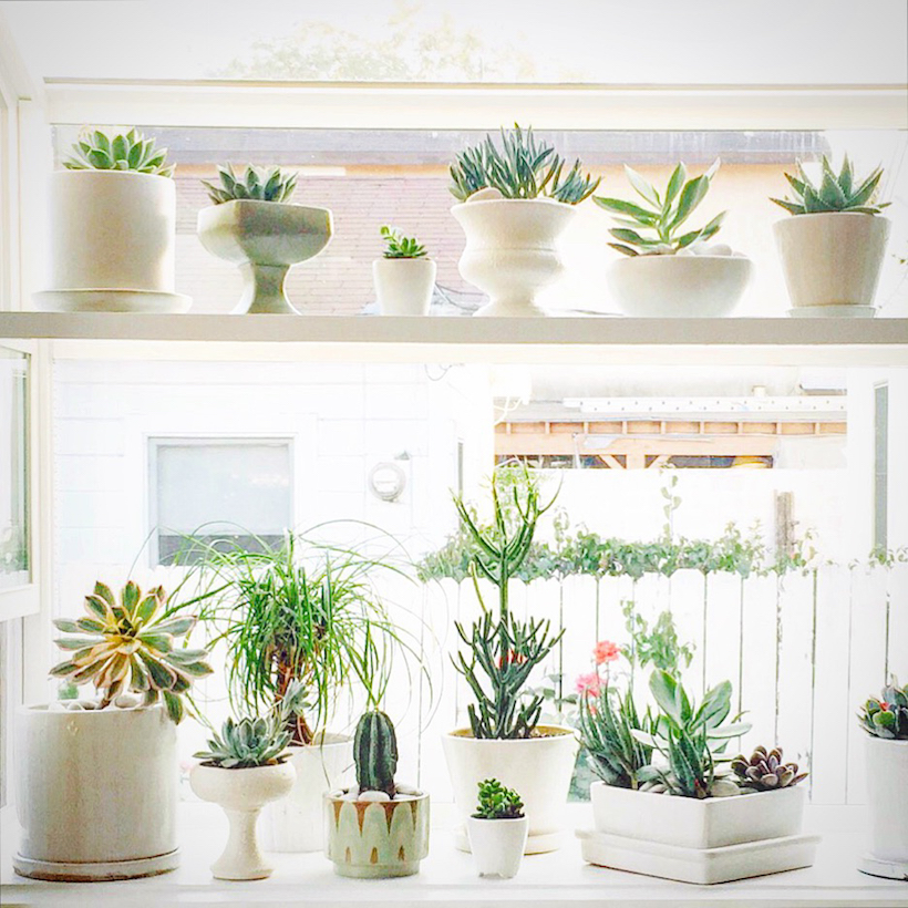 cacti on shelves in a window