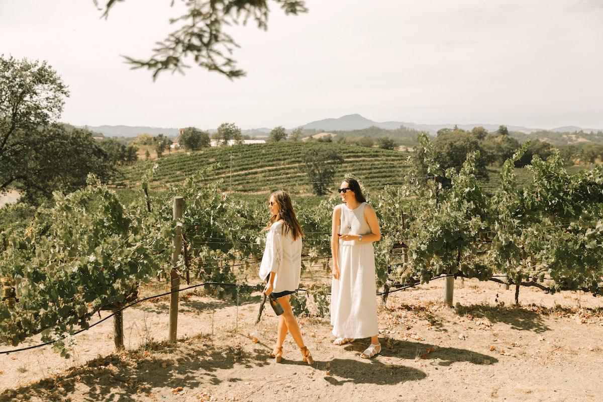 vineyard sonoma county