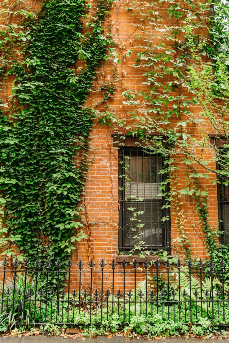 brooklyn home gorgeous greenery