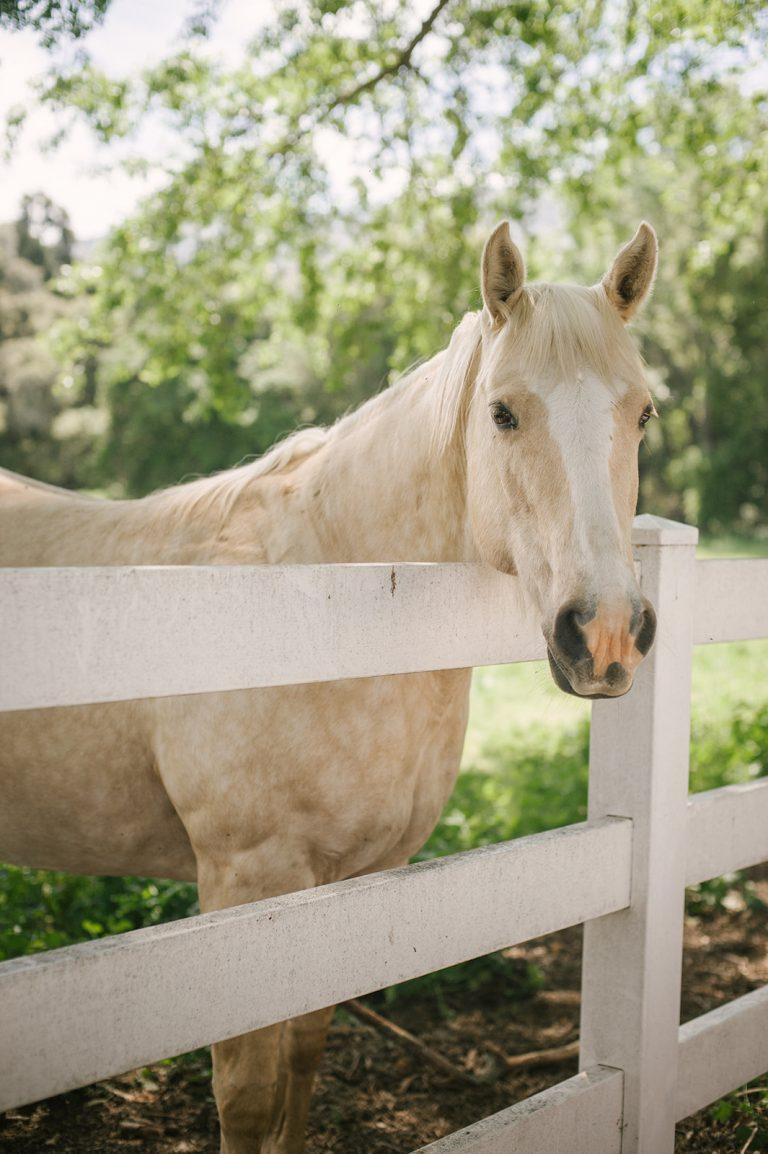 horse ranch folded hills santa ynez