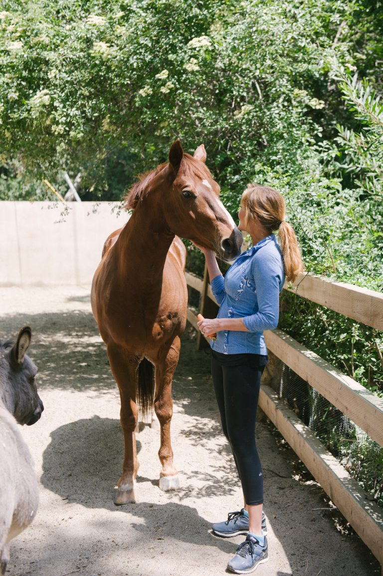 farm, horse, donkey