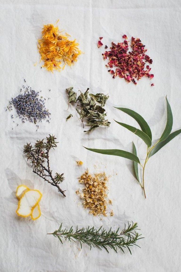 herbs, herbal