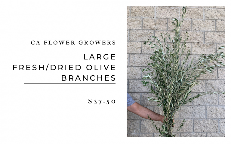 CA Flower Growers Large Fresh/Dried Olive Branches