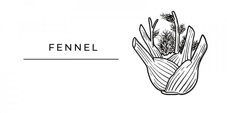 Seasonal Produce Fennel