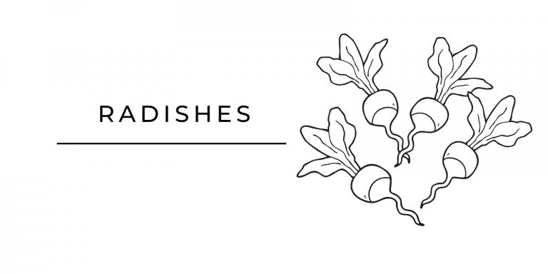 Seasonal Produce Radishes