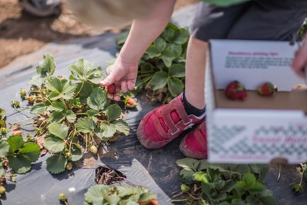 go berry picking - summer bucket list ideas for things to do when you're bored