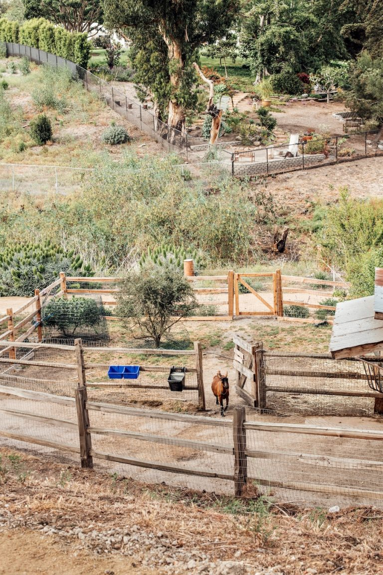 goats at malibu farm