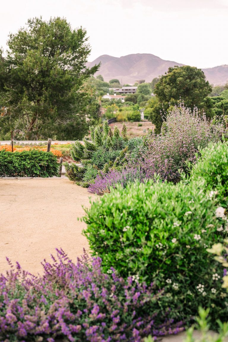 lavender rosemary garden - helene henderson home