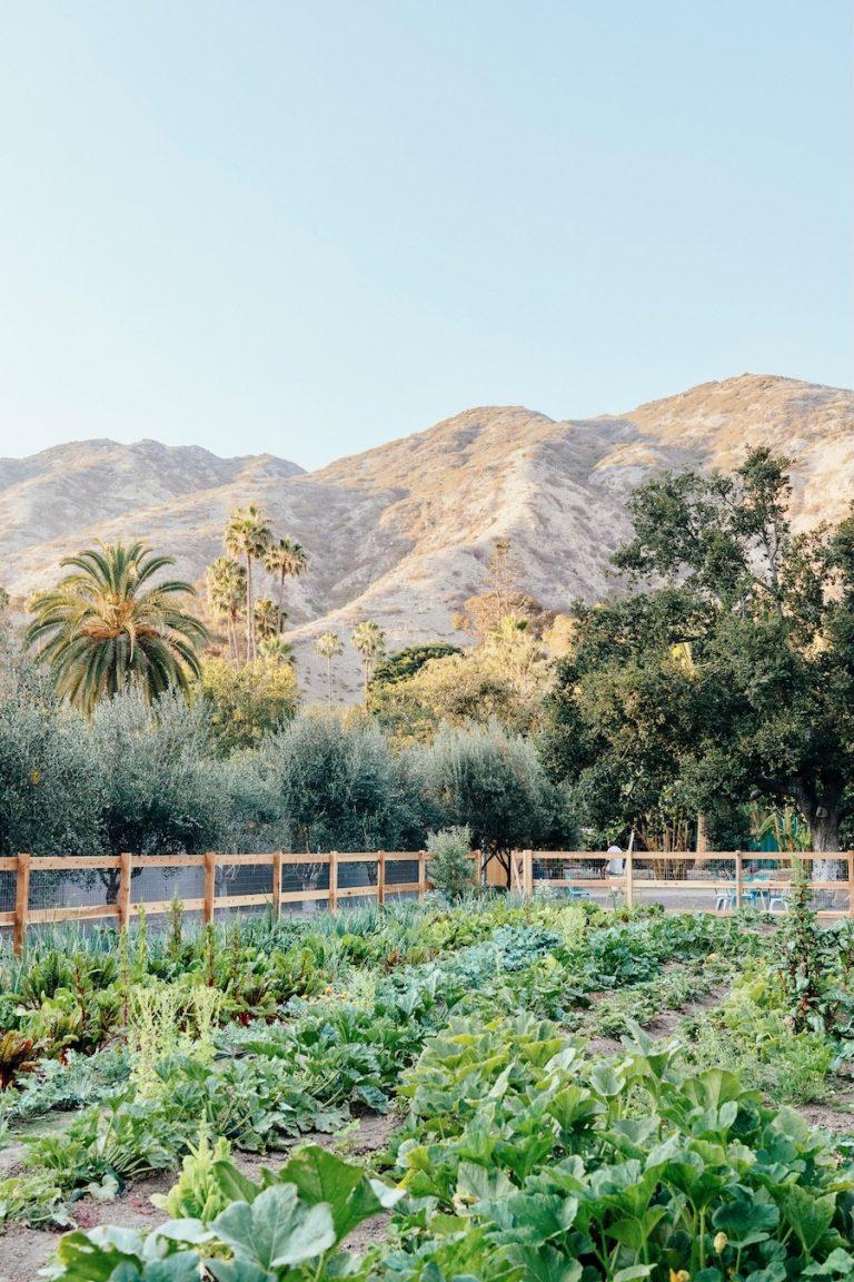 Plumcot Farm in Malibu, palm trees, mountains