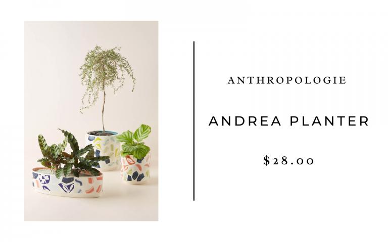 anthropologie andrea planter
