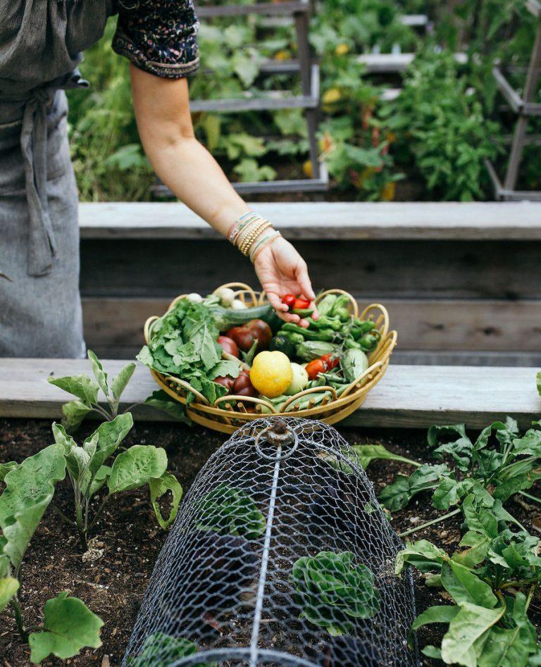 Valerie Rice dinner party in Santa Barbara, vegetable garden, summer produce, veggies