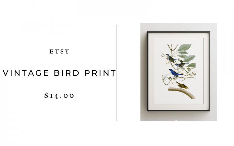etsy vintage bird print