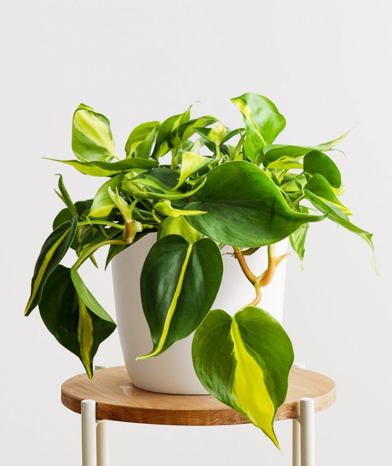 best indoor hanging plants